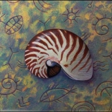 Shell of Nautilus
